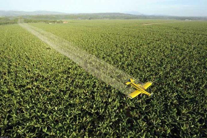 Пестициды проникают в воду и пищу, а в конечном итоге — в наш организм.