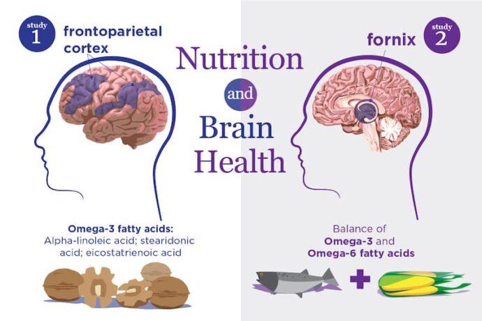 Как жирные полиненасыщенные кислоты влияют на генетику головного мозга